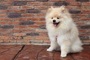short essay on my pet dog for kids